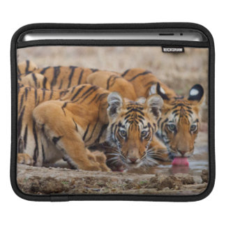 Royal Bengal Tiger cubs at the waterhole iPad Sleeve