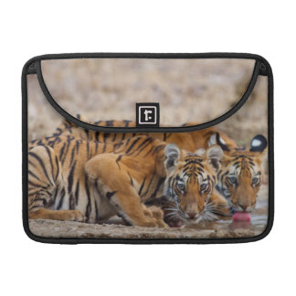 Royal Bengal Tiger cubs at the waterhole Sleeve For MacBook Pro
