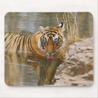 Royal Bengal Tiger drinking in the forest Mouse Mat