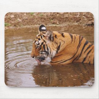 Royal Bengal Tiger drnking water in the jungle Mouse Mat