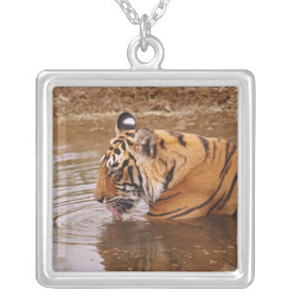 Royal Bengal Tiger drnking water in the jungle Square Pendant Necklace