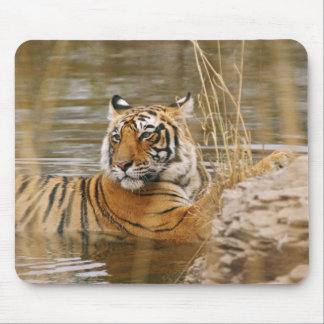 Royal Bengal Tiger in the forest pond, Mouse Pad