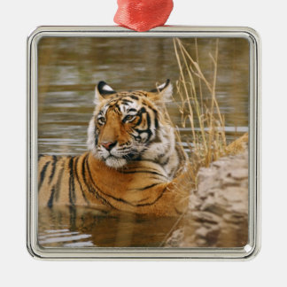 Royal Bengal Tiger in the forest pond, Silver-Colored Square Decoration