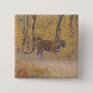 Royal Bengal Tiger in the forest, Ranthambhor 15 Cm Square Badge