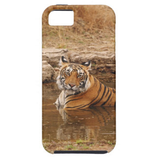 Royal Bengal Tiger in the jungle pond, 2 Case For The iPhone 5