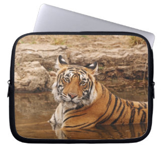 Royal Bengal Tiger in the jungle pond, 2 Computer Sleeves