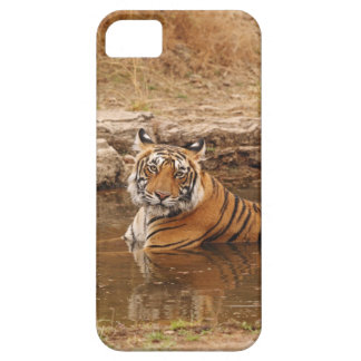 Royal Bengal Tiger in the jungle pond, 2 iPhone 5 Cover