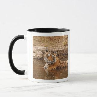Royal Bengal Tiger in the jungle pond, 2 Mug