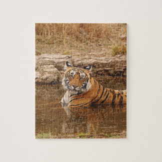 Royal Bengal Tiger in the jungle pond, 2 Puzzles