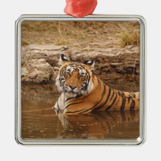Royal Bengal Tiger in the jungle pond, 2 Silver-Colored Square Decoration