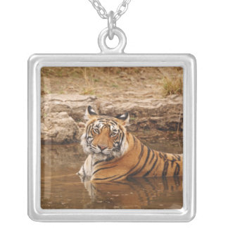 Royal Bengal Tiger in the jungle pond, 2 Square Pendant Necklace