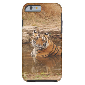 Royal Bengal Tiger in the jungle pond, 2 Tough iPhone 6 Case
