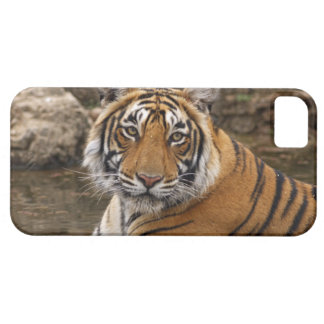 Royal Bengal Tiger in the jungle pond, Barely There iPhone 5 Case