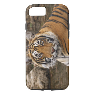 Royal Bengal Tiger in the jungle pond, iPhone 8/7 Case