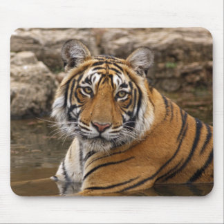 Royal Bengal Tiger in the jungle pond, Mouse Mat