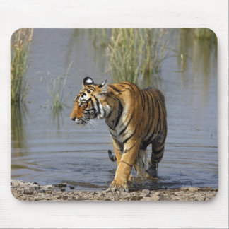 Royal Bengal Tiger in the Rajbagh Lake, Mouse Mat