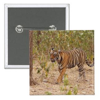 Royal Bengal Tiger moving around the bush, 15 Cm Square Badge