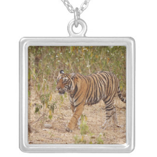 Royal Bengal Tiger moving around the bush, Square Pendant Necklace