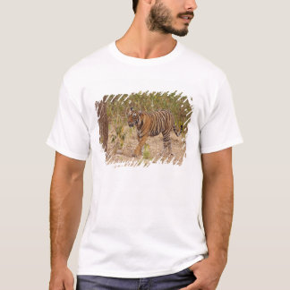 Royal Bengal Tiger moving around the bush, T-Shirt