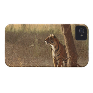 Royal Bengal Tiger on look out for prey, Case-Mate iPhone 4 Case