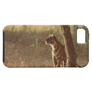 Royal Bengal Tiger on look out for prey, iPhone 5 Case