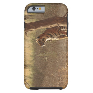 Royal Bengal Tiger on look out for prey, Tough iPhone 6 Case