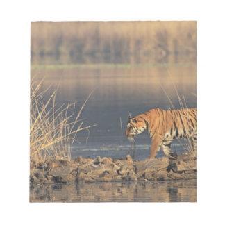 Royal Bengal Tiger on the move, Ranthambhor 2 Notepad