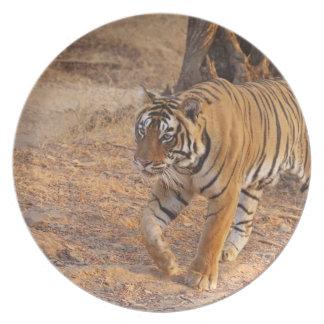 Royal Bengal Tiger on the move, Ranthambhor Dinner Plate