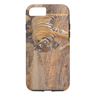 Royal Bengal Tiger on the move, Ranthambhor iPhone 8/7 Case