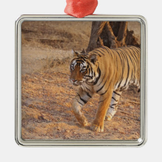 Royal Bengal Tiger on the move, Ranthambhor Silver-Colored Square Decoration