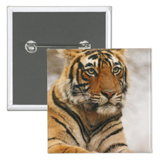 Royal Bengal Tiger on the rock, Ranthambhor 15 Cm Square Badge