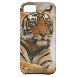Royal Bengal Tiger on the rock, Ranthambhor iPhone 5 Cases