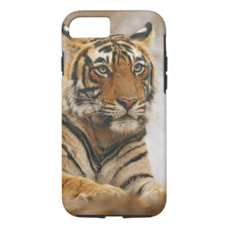Royal Bengal Tiger on the rock, Ranthambhor iPhone 7 Case