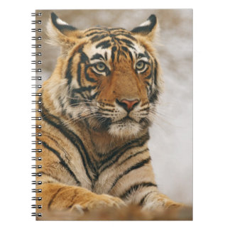 Royal Bengal Tiger on the rock, Ranthambhor Note Book