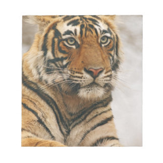 Royal Bengal Tiger on the rock, Ranthambhor Notepad