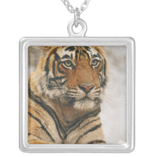 Royal Bengal Tiger on the rock, Ranthambhor Silver Plated Necklace