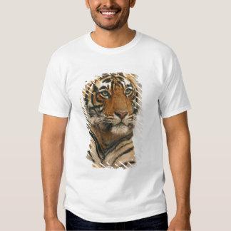 Royal Bengal Tiger on the rock, Ranthambhor Tee Shirts