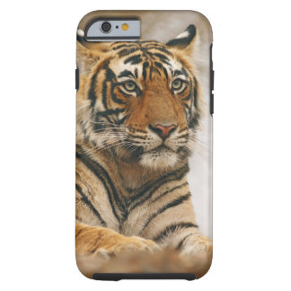 Royal Bengal Tiger on the rock, Ranthambhor Tough iPhone 6 Case