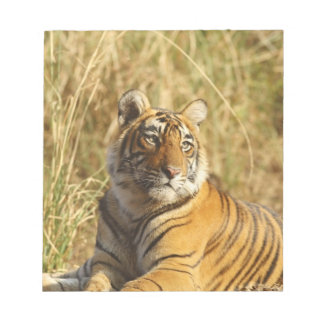 Royal Bengal Tiger outside the grassland, Notepad