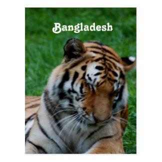 Royal Bengal Tiger Post Card