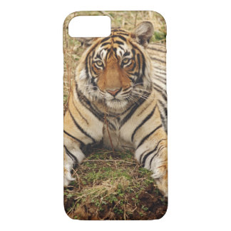 Royal Bengal Tiger, Ranthambhor National Park, iPhone 8/7 Case