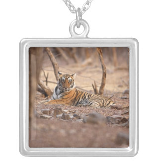 Royal Bengal Tiger, Ranthambhor National Park, Square Pendant Necklace