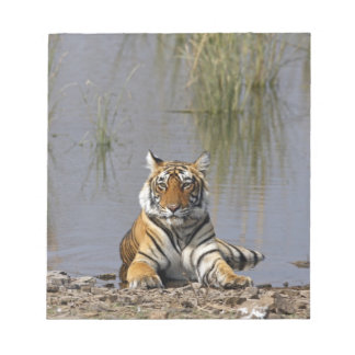 Royal Bengal Tiger sitting in the Rajbagh Lake, Notepad