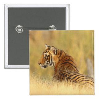 Royal Bengal Tiger sitting outside grassland, 2 15 Cm Square Badge