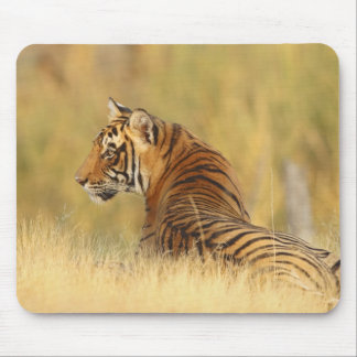 Royal Bengal Tiger sitting outside grassland, 2 Mouse Mat