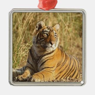 Royal Bengal Tiger sitting outside grassland, Christmas Ornament