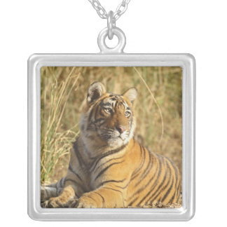 Royal Bengal Tiger sitting outside grassland, Silver Plated Necklace