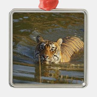 Royal Bengal Tiger swiming, Ranthambhor Christmas Ornament