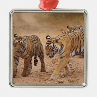 Royal Bengal Tigers on the move, Ranthambhor 2 Christmas Ornament