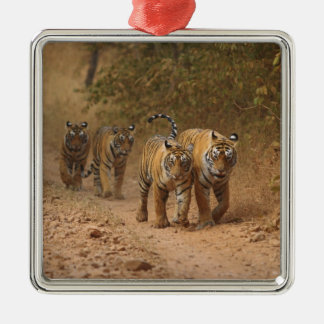 Royal Bengal Tigers on the move, Ranthambhor Silver-Colored Square Decoration